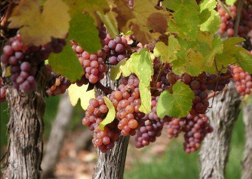 Near la Route des Vins d'Alsace